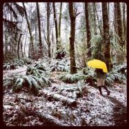 Cougar Mountain, 7 miles, December 16, 2012