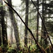 Goth hike, Tiger Mountain, February 1, 2013