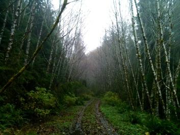 Bogachiel River, November 19, 2012, 5 miles