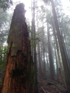 Squak Mtn (Nko Solo), December 27, 2012