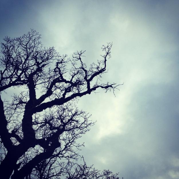 holy oaks